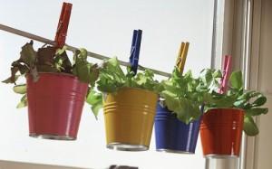 комнатные растения на прищепках