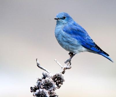 синяя птица прилет к вам?