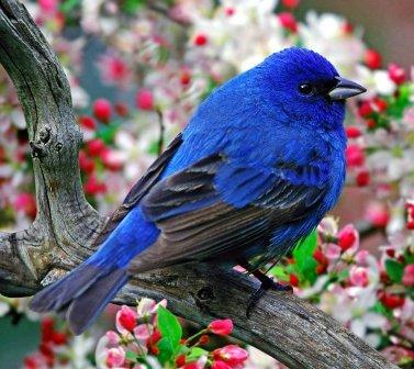 синяя птица ответит на все вопросы...по кокологии
