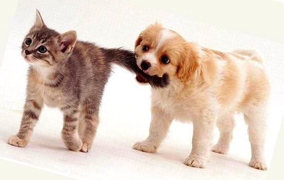 Прокрастинатор, почему ты тянешь кота за хвост