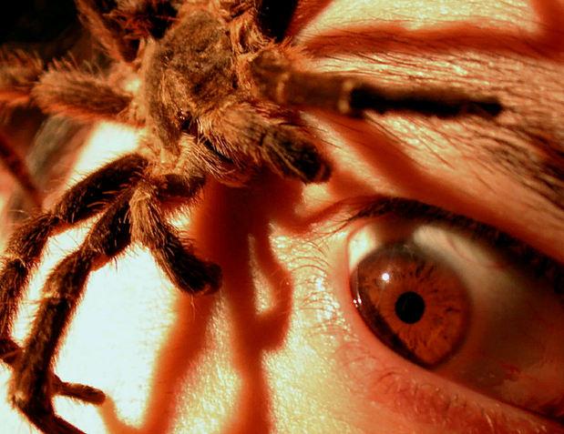 боязнь пауков арахнофобия