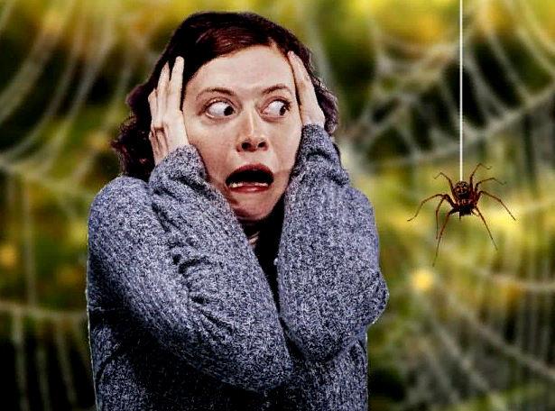 причины боязни пауков